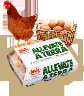 gallina con cesto d'uova